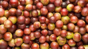 camu-camu-fruit