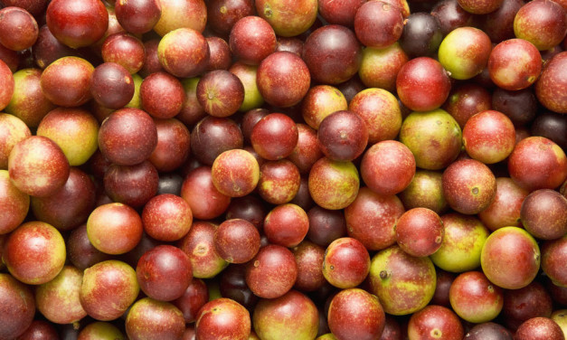 Camu Camu Amazing Facts
